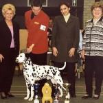 Coppola at belgium club show 2001 - Junior BIS