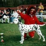 Coppola at his 1st show winning Puppy BIS