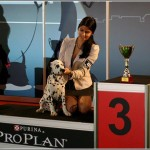 Danny on his 1st show winning PUPPY BEST IN SHOW 3rd pl.