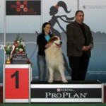 Danny winning r. BEST IN SHOW NATIVE BREEDS @ CACIB ZAGREB 2012