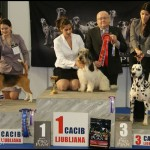 Danny winning 3rd BEST OF GROUP @ CACIB LJUBLJANA 2012