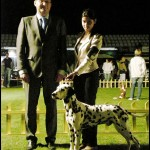 Danny winning JUNIOR BEST OF BREED @ CROATIAN CLUB SHOW IN SPLIT 2011