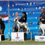 Danny winning JUNIOR BEST IN SHOW @ CACIB ZADAR 2011