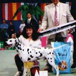 "Corrado winning BEST IN SHOW SPECIALTY & ""DALMATIA WINNER 1996"" @ CACIB SPLIT 1996"