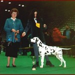 Corrado winning BEST IN SHOW ALL BREEDS @ CACIB ZAGREB 1996