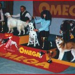 Corrado winning BEST OF DAY 3rd pl. @ CACIB ZAGREB 1997