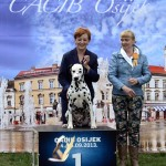 BEST IN SHOW native breeds @ Int. show Osijek '13