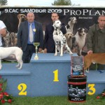 Nory winning BEST IN SHOW native breeds @ CAC SAMOBOR 2009