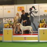Nory winning BEST OF GROUP 3rd pl. @ CACIB ZAGREB 2009