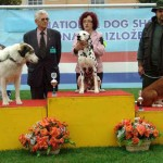 Nory winning BEST IN SHOW native breeds @ CAC VUKOVAR 2007