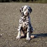 Poppy 2,5 months